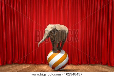 Circus elephant on stage balancing on ball