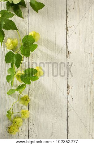 hop cones on wooden background