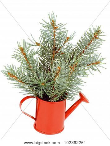 Green Spruce Branches Bunch