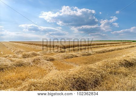 Rows of straw in front of a wheat field