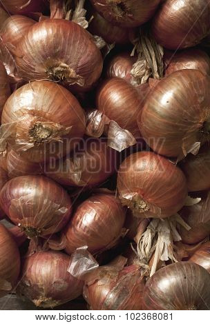 Batch Of Drying Red Onion.
