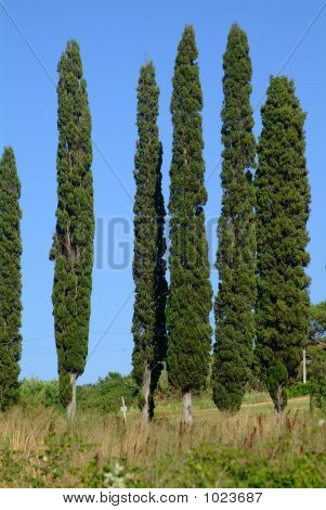 Cypress 6