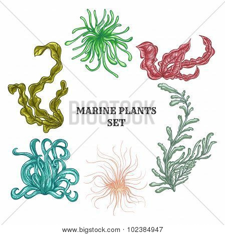 Collection of marine plants, leaves and seaweed. Vintage set of colorful hand drawn marine flora.