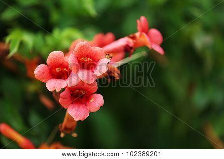 Pink flower in garden, close-up