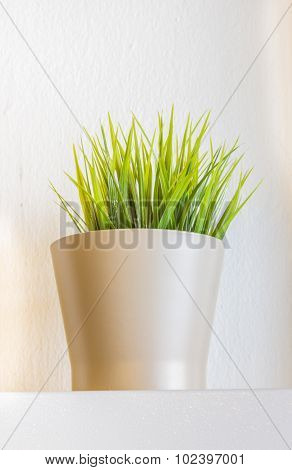 Plant In A Flower Pot.