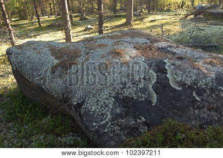 Large stone in the forest overgrown with lichen.