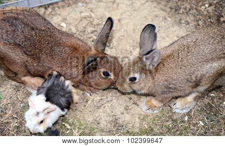 Young Rabbits While They Give You A Kiss