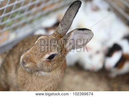 little rabbit with long ears inside the cage in the farm