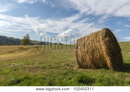 Summer Polish Landscape In Sudety