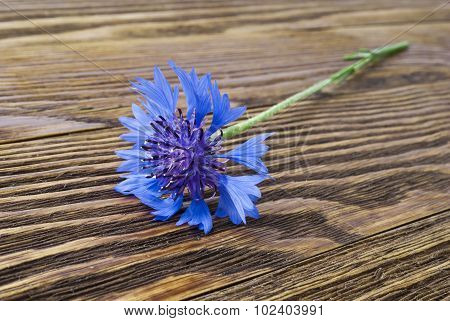 Cornflower on the wooden surface