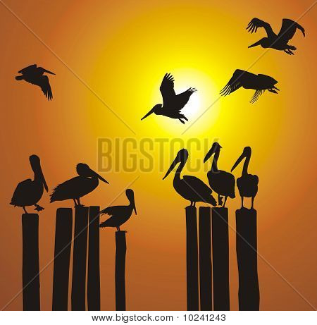 Silhouettes Pelicans And Sunset.eps