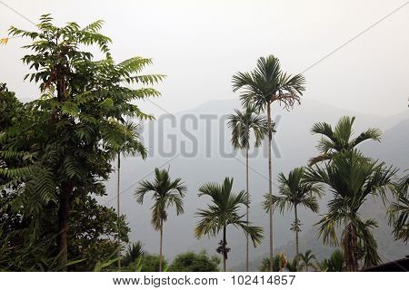 Tropical scene on a cloudy day