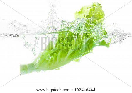 Lettuce Falls Under Water.