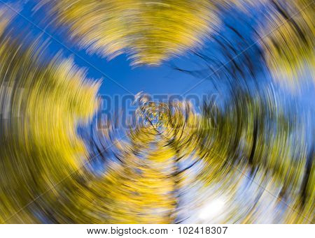 Creative spin effect on Aspen Trees