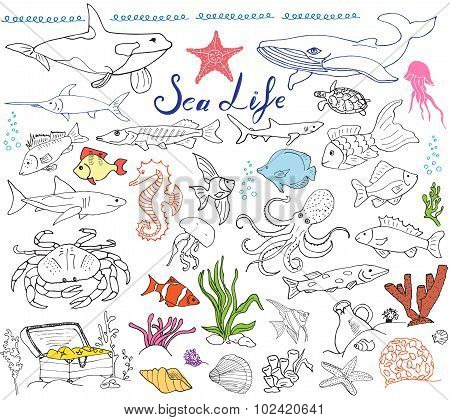 Big Sea Life Animals Hand Drawn Sketch Set. Doodles Of Fish, Shark, Octopus, Star, Crab, Whale, Turt