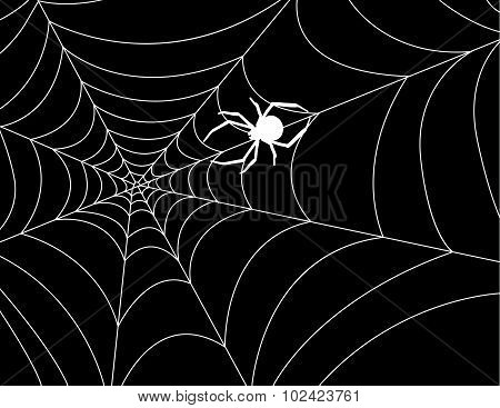 Cobweb with a spider in the center against night. Vector illustration.