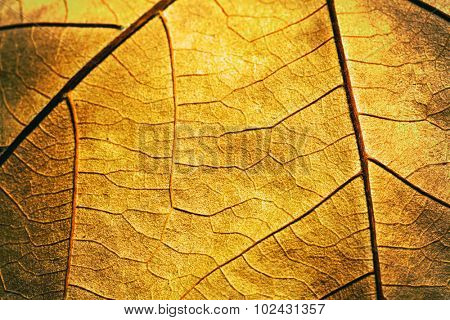 Macro detail of autumn textured leaf
