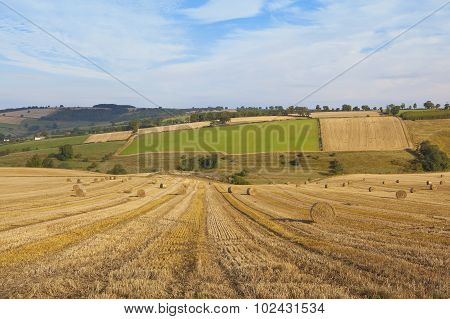 Harvest Landscape In Autumn