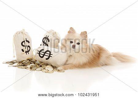 Pet Expenses