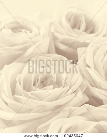 Beautiful White Roses Toned In Sepia As Wedding Background. Soft Focus. Retro Style