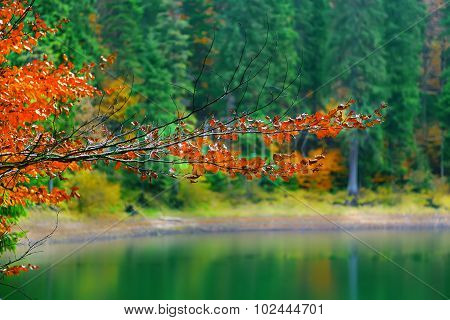 Color Branches Of Trees In Autumn