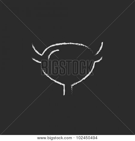 Urinary bladder hand drawn in chalk on a blackboard vector white icon isolated on a black background.