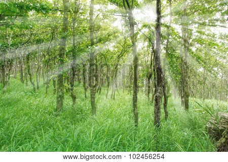 Nature Green Wood Sunlight Backgrounds.