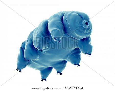 medically accurate illustration of a water bear