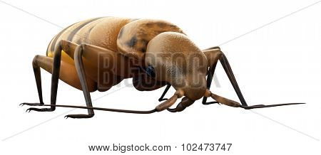 medically accurate illustration of a bed bug