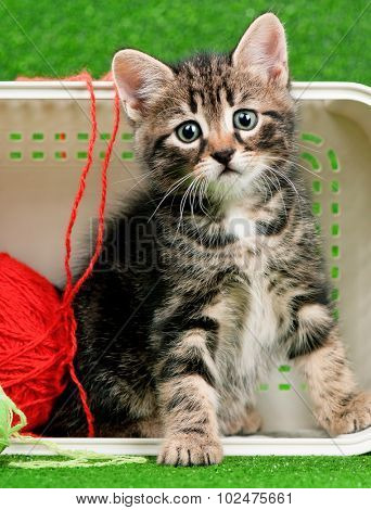 Cute kitten playing red clew of thread in box on artificial green grass