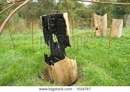 Burned Out Tree Trunks 03
