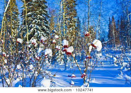 winter in Western Siberia