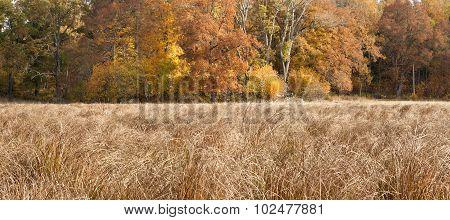 Golden, orange, brown oak leaves, reeds this side.