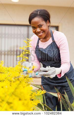 attractive african woman pruning plants in her garden