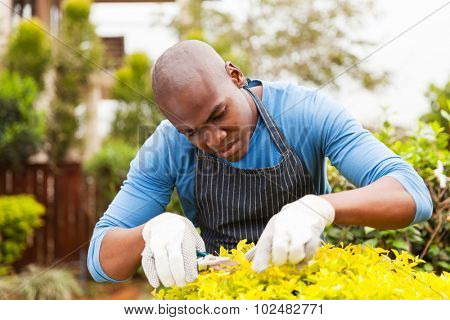 young african man pruning plant at home