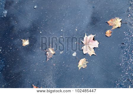 Fallen Autumn Leaves In A Puddle Of Rainwater