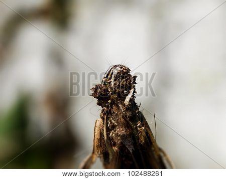 Bagworm 5