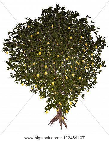Lemon tree - 3D render