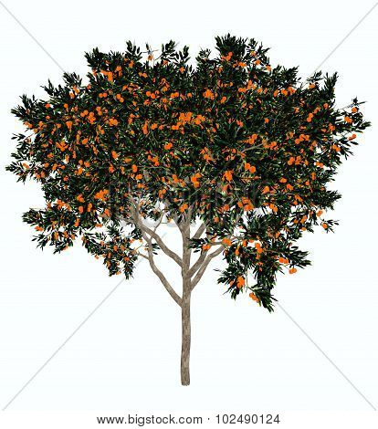 Sweet orange tree - 3D render