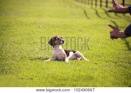 Training dog puppy
