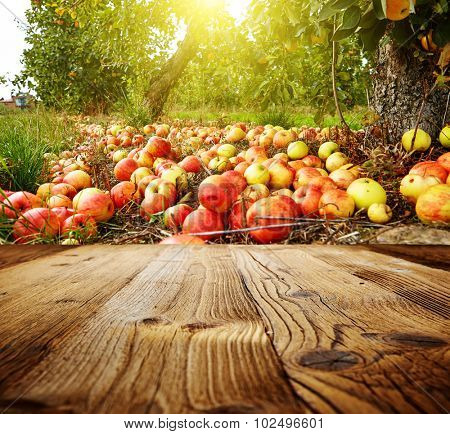 autumn apple orchard background