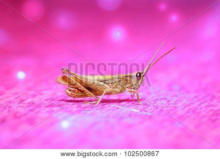 Portrait of a grasshopper in shades purple