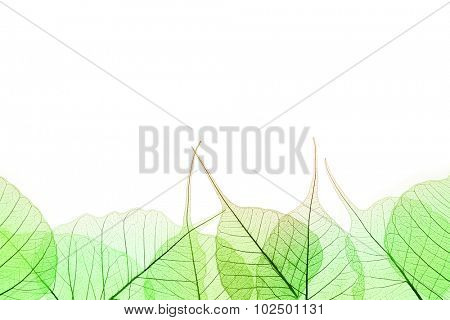 Border of Green Leaves - natural cell structure, isilated on white