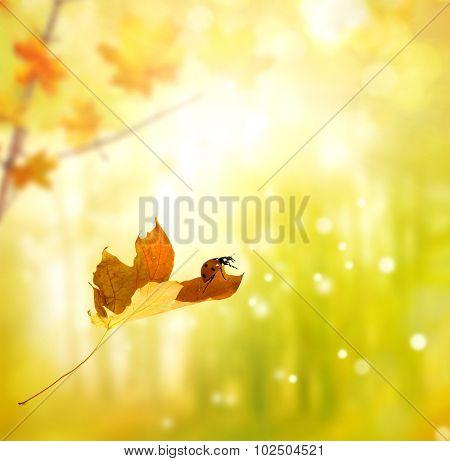 Ladybug On Autumn Leaf