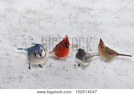 Group Of Garden Variety Birds On Snow