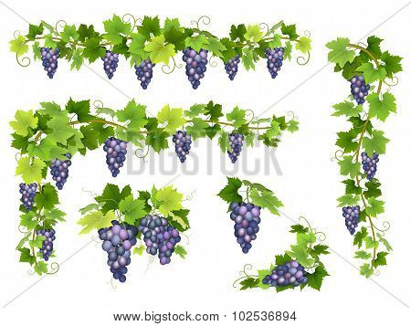 Blue Grapes Bunch Set