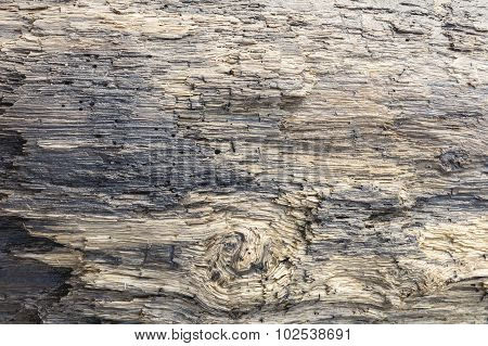 Driftwood Surface