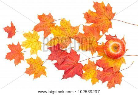 Leaves Of Maple And Apple