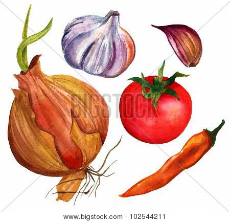 Watercolour vegetable set on white background