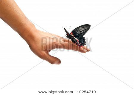 Butterfly On Man's Hand